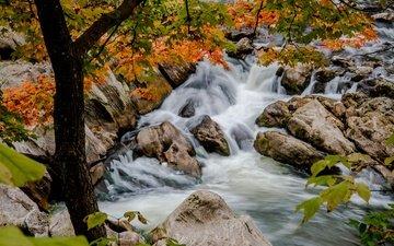 trees, river, stones, branches, thresholds, autumn, kent, connecticut, river housatonic