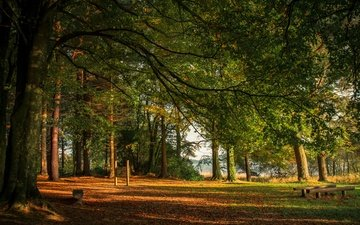 trees, river, the sun, forest, leaves, park, branches, foliage, autumn, benches, ireland, monaghan, castleblayney