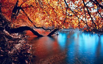 trees, water, river, nature, reflection, branches, autumn