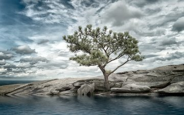 the sky, clouds, tree, shore, sea