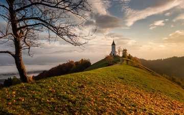tree, leaves, autumn, church, hill, slovenia
