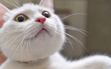 глаза, кот, усы, взгляд