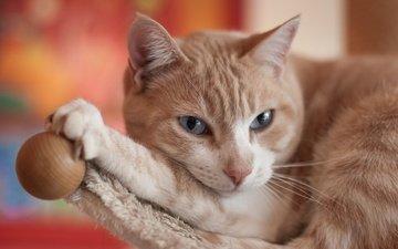 глаза, фон, кот, усы, кошка, взгляд