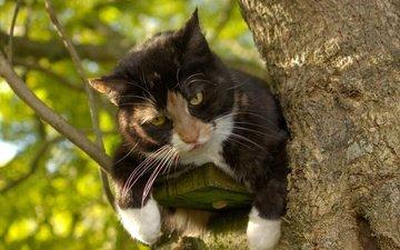 глаза, фон, кот, усы, кошка, взгляд, на дереве