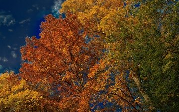 the sky, trees, leaves, autumn