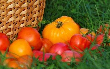 трава, урожай, овощи, помидоры, томаты