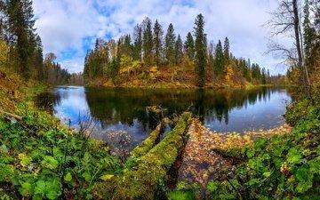 озеро, берег, лес, листья, осень, лопухи, лашков фёдор