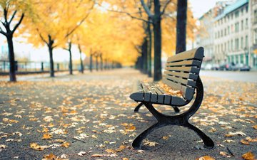park, autumn, bench, canada, shop, montreal, qc