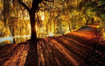 river, tree, rays, branch, autumn, sunlight