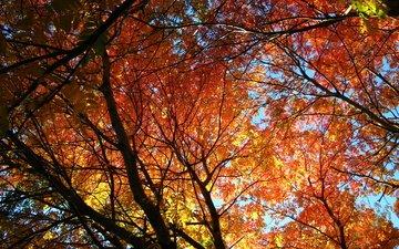 деревья, солнце, листья, осень, рябина