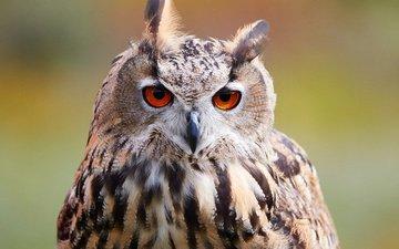 сова, природа, фон, взгляд, размытость, птица, боке, филин