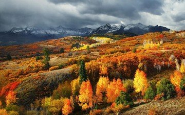 trees, mountains, forest, leaves, autumn, usa, colorado