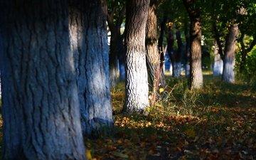 трава, деревья, листья, осень