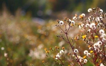 трава, фон, осень, стебли, пух, полевые цветы, цветочки