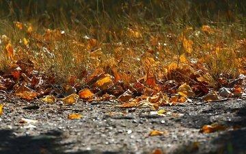 трава, листва, осень, асфальт