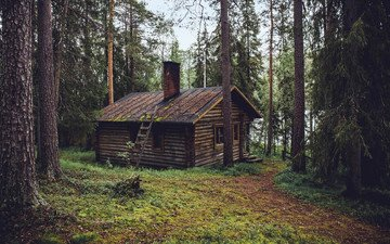trees, nature, forest, landscape, house, hut