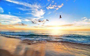 sea, fish, birds