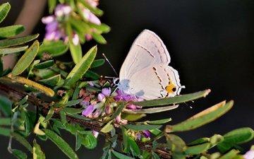 цветы, ветка, листья, насекомое, фон, бабочка, крылья