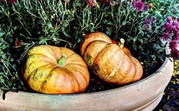flowers, harvest, vegetables, pumpkin, flowerbed