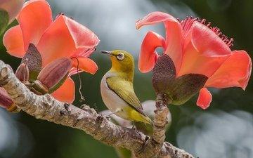 цветы, птица