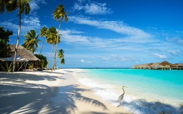 sea, beach, resort, bungalow, bird, tropics, the maldives