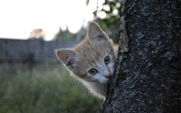 nature, tree, cat