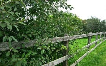 трава, деревья, зелень, парк, лето, ограда, поселок, деревяные ограды