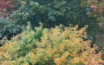 trees, forest, leaves, branches, autumn, fall colors
