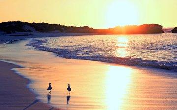 sunset, sea, beach, mom