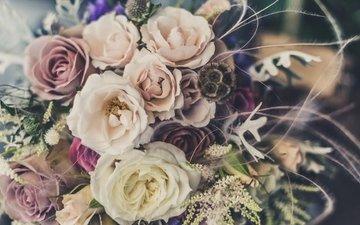 розы, лепестки, букет