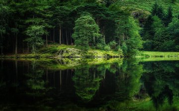 деревья, река, природа, лес, отражение