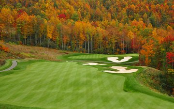 trees, nature, forest, landscape, field, autumn, golf, ejkrouse