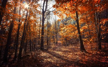 trees, nature, forest, leaves, autumn, canada, ontario, dustin abbott