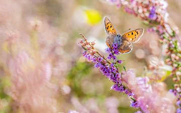 flowers, macro, insect, butterfly, wings, blur