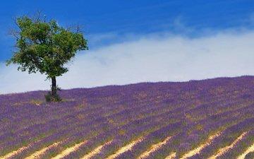the sky, flowers, clouds, nature, tree, landscape, field, lavender, horizon