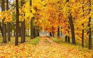 trees, nature, forest, leaves, park, autumn, alley
