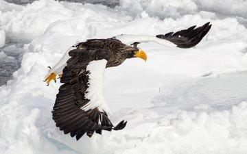 полет, крылья, орел, птица, клюв, перья, орлан, mike johnson