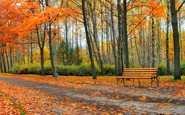 trees, nature, leaves, park, autumn, bench, alley
