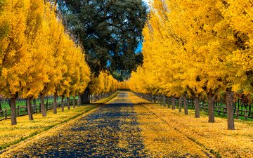 road, trees, nature, leaves, park, autumn, the fence, alley