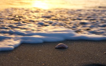 landscape, sea, sand, beach, shell