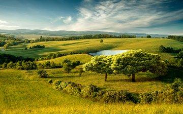 деревья, холмы, природа, кусты, долина