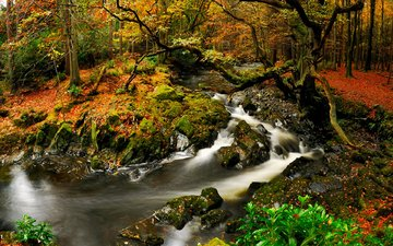 river, nature, forest, autumn