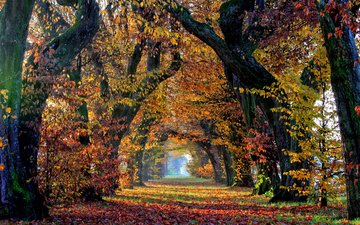trees, nature, leaves, park, autumn, alley