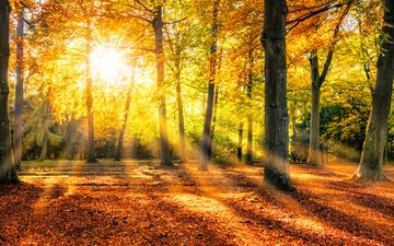 trees, the sun, nature, forest, park, trunks, autumn