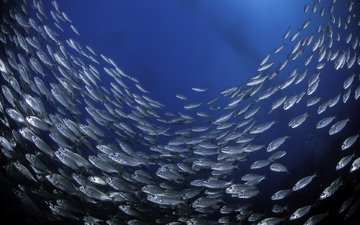 море, рыбы, подводный мир, косяк, подводная, juliosanjuan
