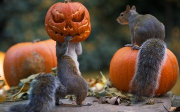 pumpkin, proteins, squirrels, max ellis