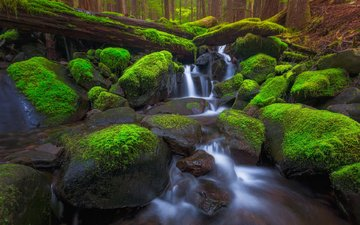 trees, stones, forest, stream, usa, moss, washington