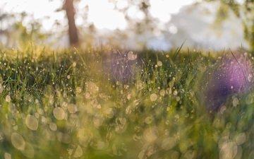 трава, макро, роса, капли