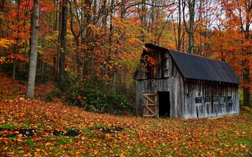 trees, nature, forest, leaves, autumn, house, the barn
