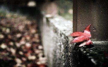 макро, осень, забор, лист